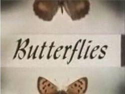 Butterflies-1978